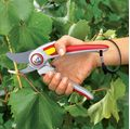 Wolf Cutting and Pruning